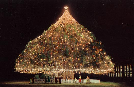 last night my daughter saw the worlds largest christmas tree for the first time when we moved to this area when i was 9 we seldom went into wilmington as - Worlds Largest Christmas Tree